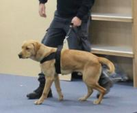 Fully trained dog being used for security in prison