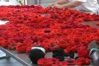 Knitted red poppies done by the women prisoners at Dame Phyllis Frost Centre
